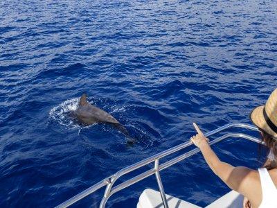 Avistamiento de cetáceos para niños en Tenerife 3h
