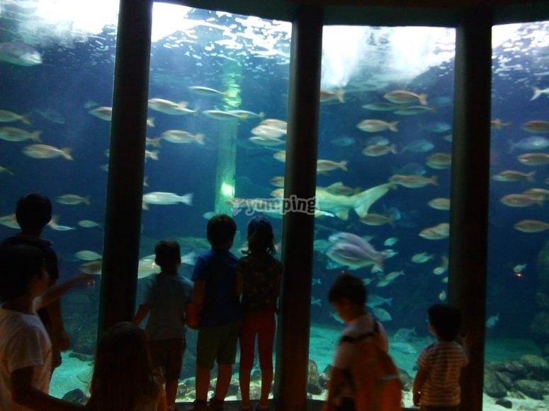 Excursion to the aquarium