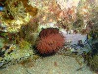 Curious marine species