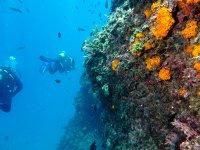 发现海底的颜色