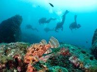在马拉加的潜水