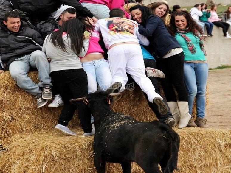 Suelta adrenalina con nuestras vaquillas