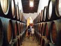 Rutas del vino ecologico