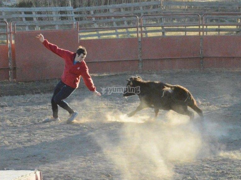 逃离小母牛