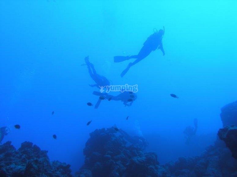 Buzos bajo el agua