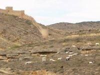 Tradiciones de pastoreo en la Sierra de Albarracín