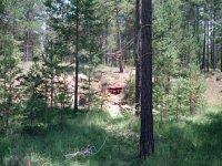 Bosque perfecto para realizar la actividad