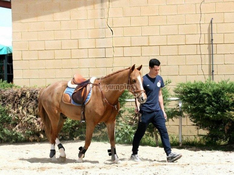 Sacando al caballo a la pista
