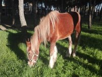 Algunos de nuestros caballos del centro