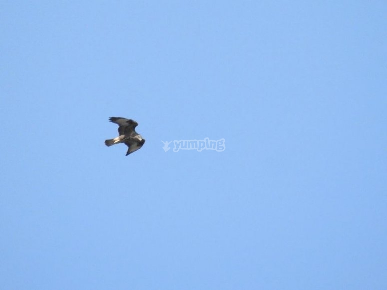 Aves de Sierra Nevada