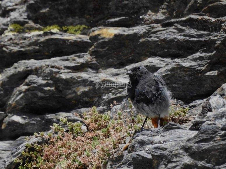 Pajaro posado en la roca