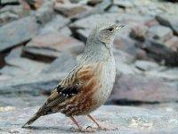 Ruta ornitologica en Granada