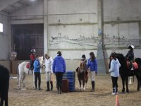 Activities with ponies