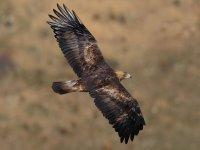 Ornithology in Madrid and Avila