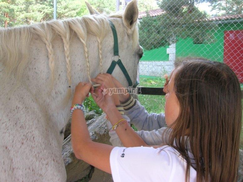 Setting the horse