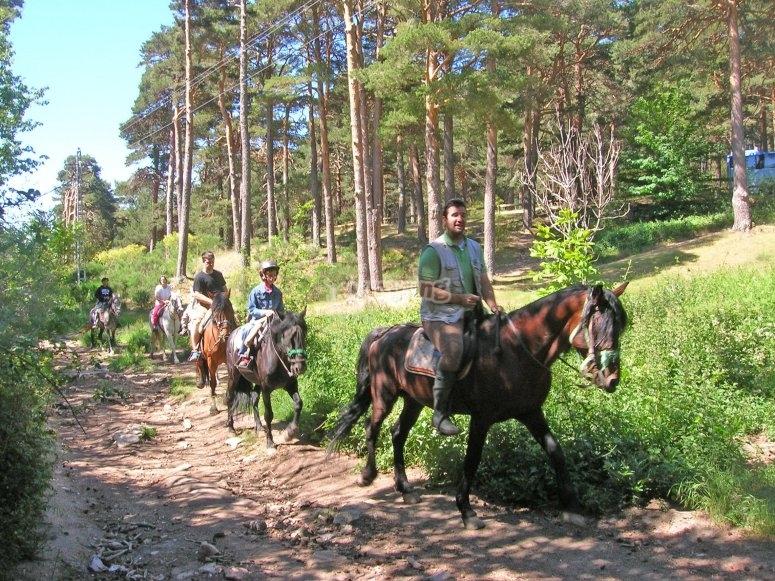 Horses in Valle de la Fuenfría