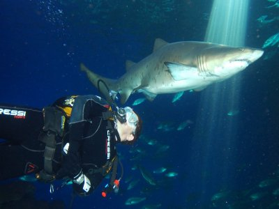 Diving w. Sharks at Palma Aquarium Mallorca