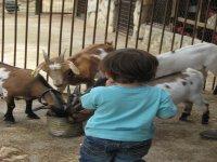 damos de comer a los animales