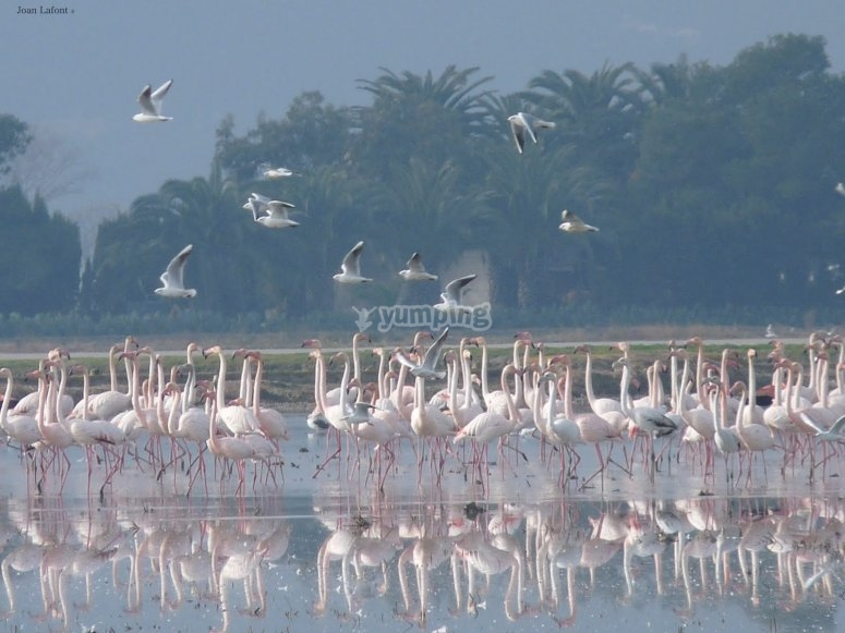 Watching the flamingos in the Natural Park