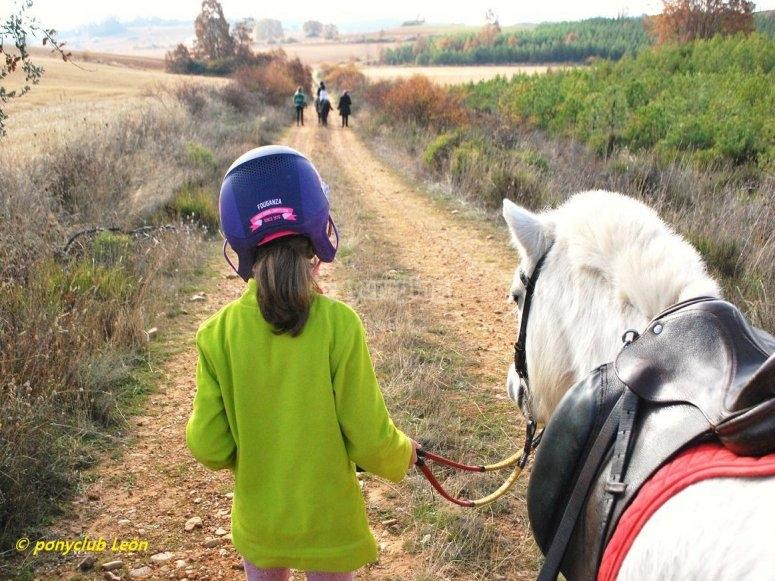 与小马一起散步