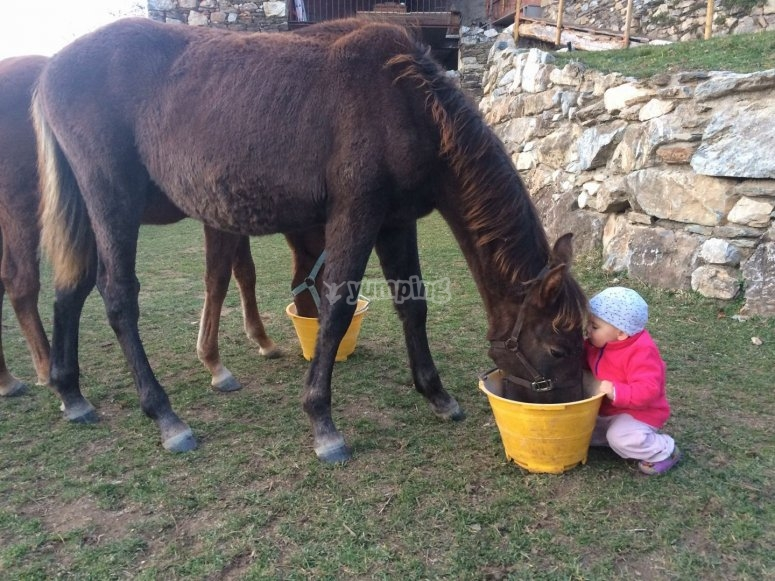 Little one next to the horse whilts eating
