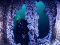 海底发现一个独特的经验,不同的一天