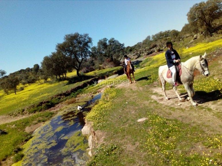 Horseback excursion