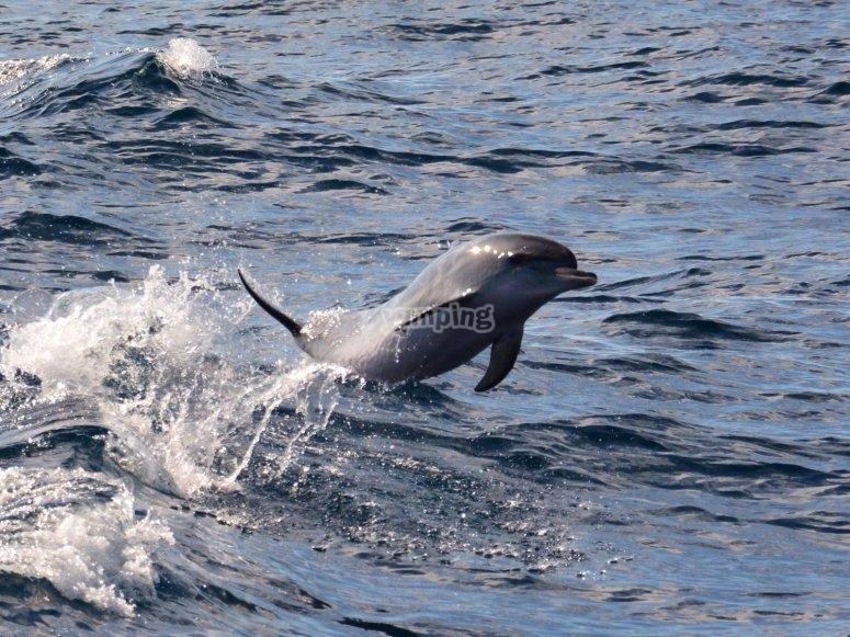 Dolphin sightseeing