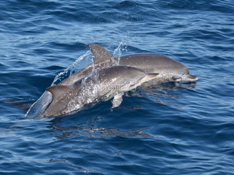 Watching dolphins from the boat