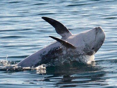 在大加那利岛2小时成人看船从海豚