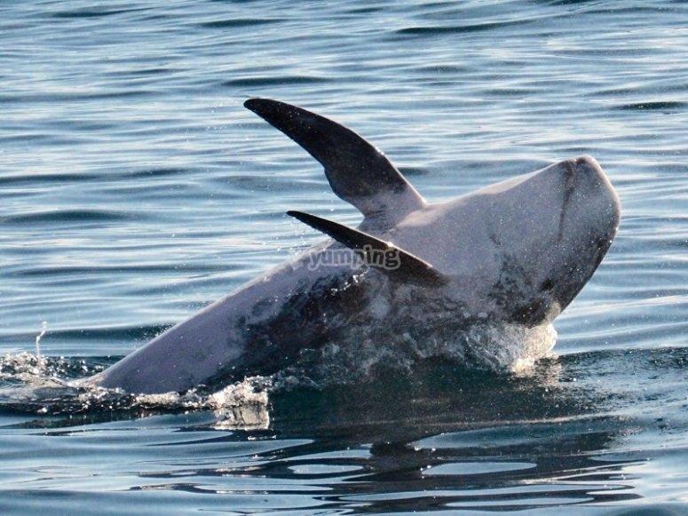 Divisar delfines