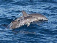 Viendo cetaceos desde el barco