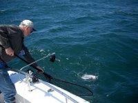 电位法捕获深海捕鱼隐藏的大小