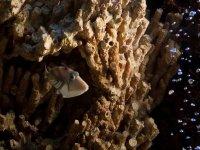 Nascosto nel corallo