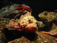 在珊瑚和海星鱼