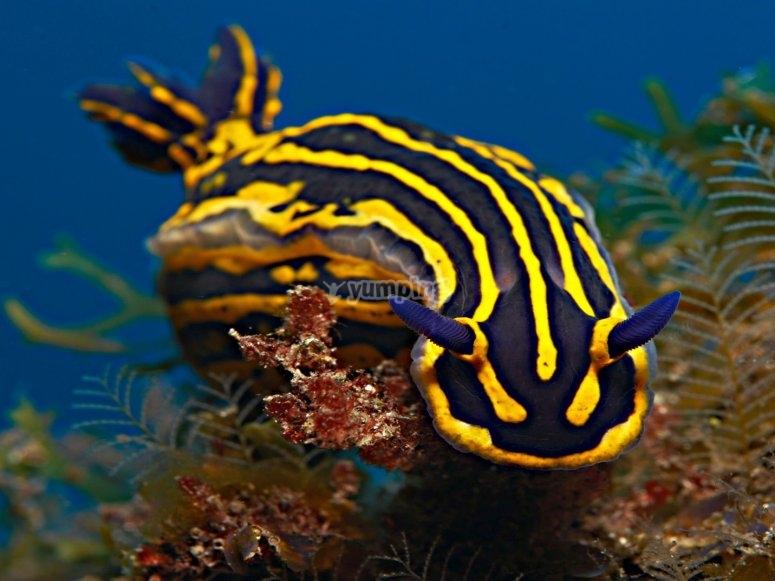 Descubre la fauna del mar