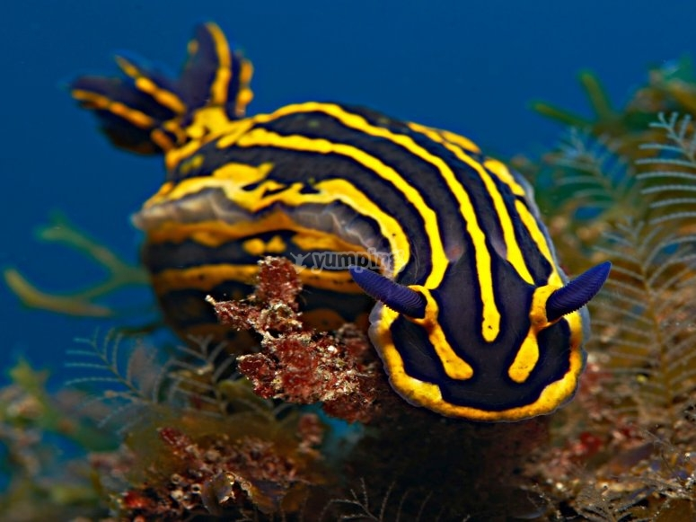 Discover the fauna of the sea