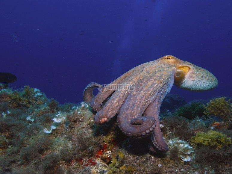 Octopus in Tenerife
