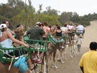 Treinta minutos montados en camello