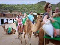 Disfruta en el camello