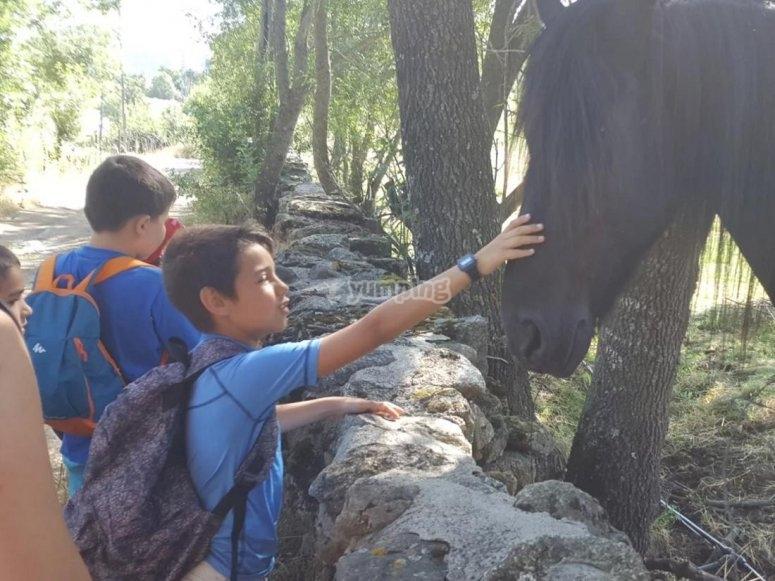 Tocando al caballo