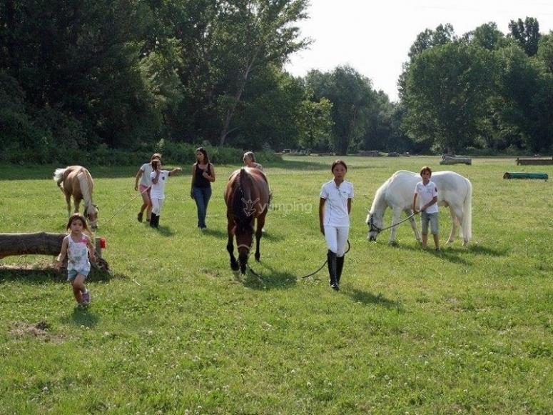 Jugando con los caballos