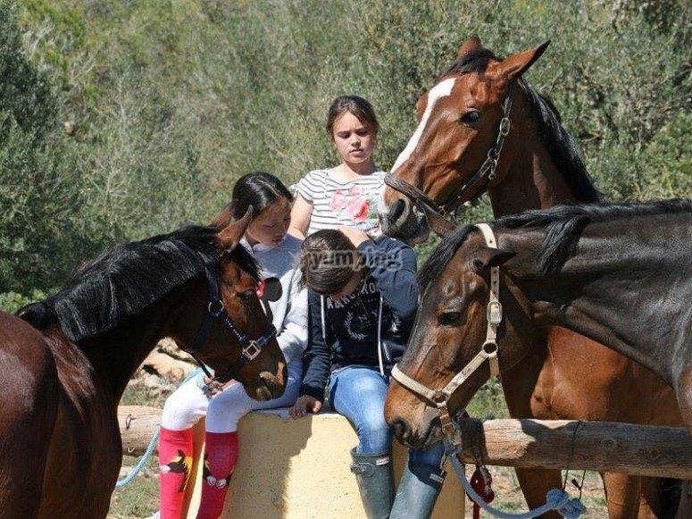 Rodeadas de caballos