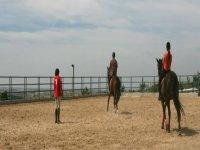 盛装舞步和骑马课。
