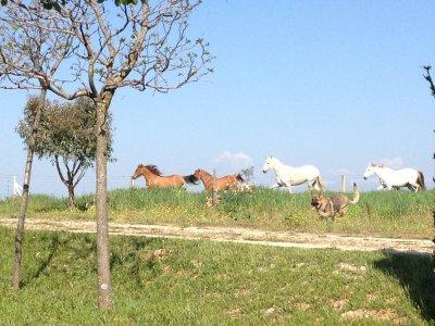 Ruta a caballo y comida para 2 en Calera y Chozas