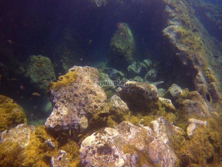 Nuoto tra pesci