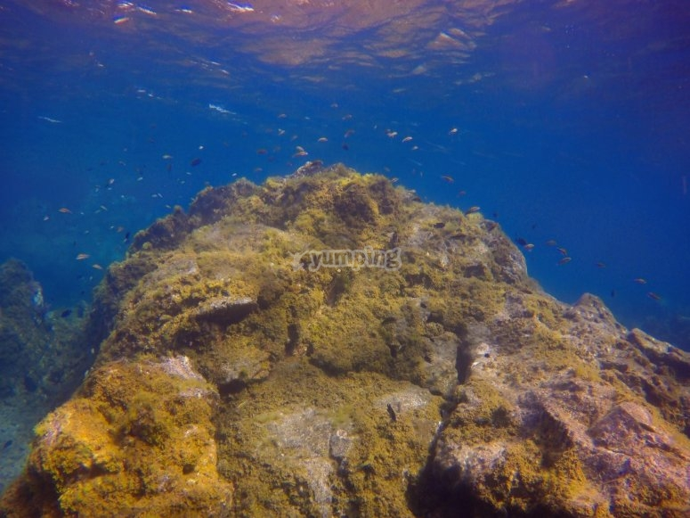 Seabed of Tenerife