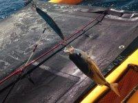 vive la pesca