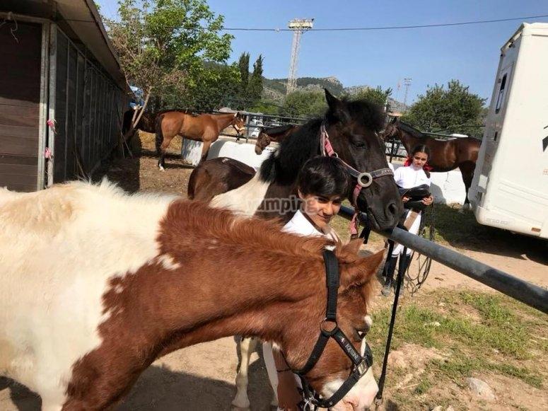 Preparando a los equinos