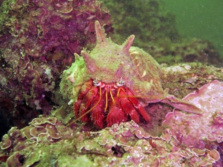 Submarinismo con buzos titulados